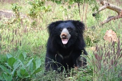 sloth-bear-1136129_1920.jpg