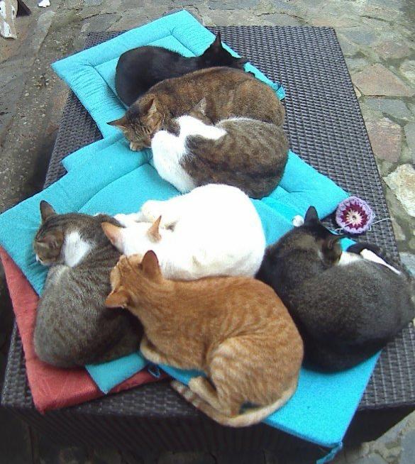 Cat Heaven - Jack's katten café Hoi An