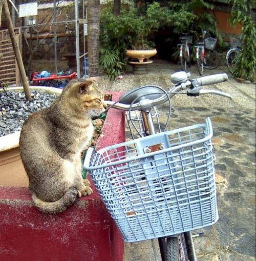 Jack's katten café Hoi An Vietnam