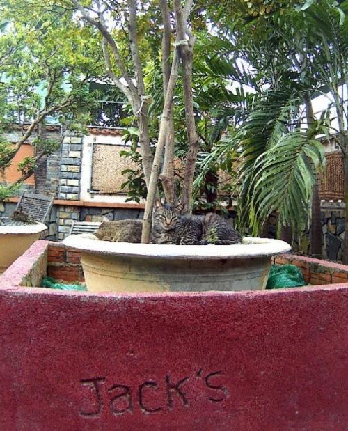 Jack's katten café Hoi An