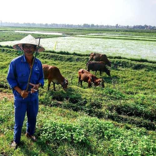 Boer in de rijstvelden van Hoi An Vietnam