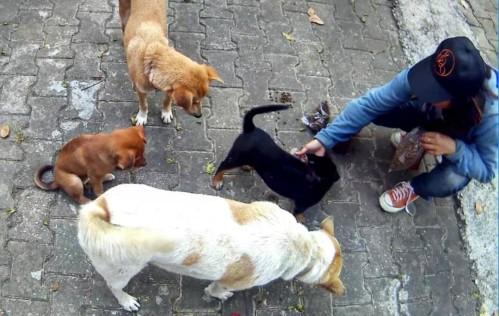 Reisgids Baja Bikes - honden voeren