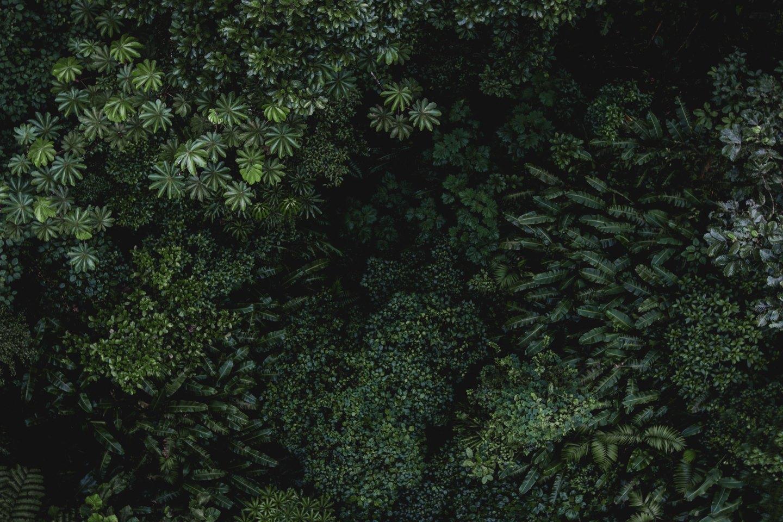 Amazone tropische regenwoud Brazilië