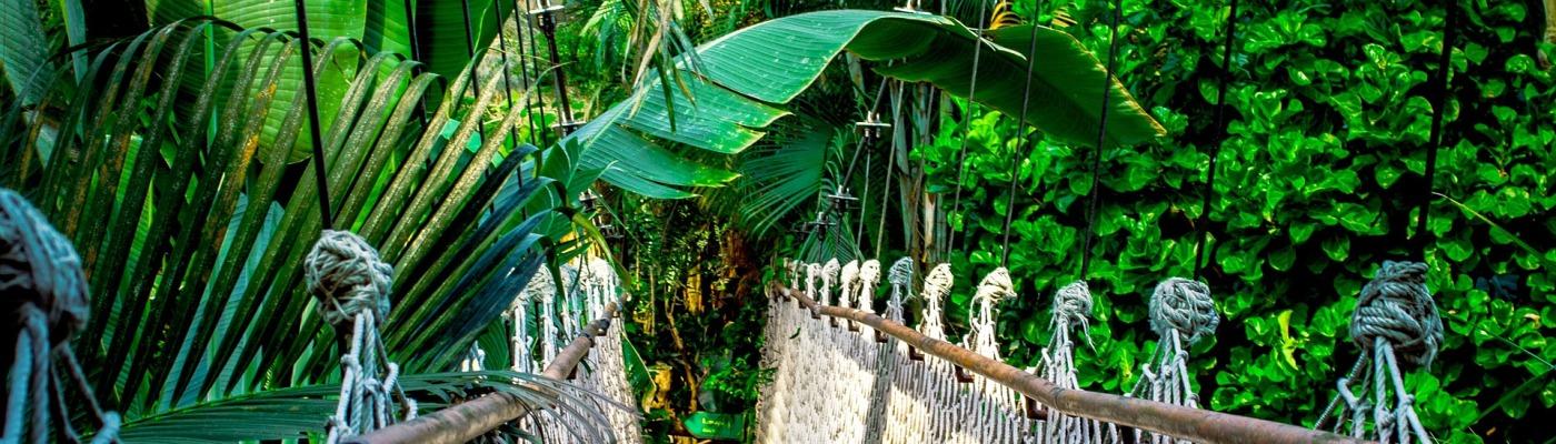 De Amazone