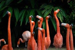 Flamingo's Parque das Aves Brazilië