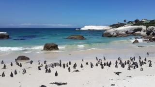 Pinguïnstrand Kaapstad, Boulder Beach