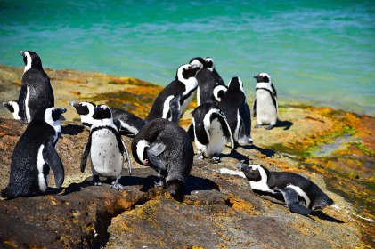 Reistips Kaapstad - Boulders Beach