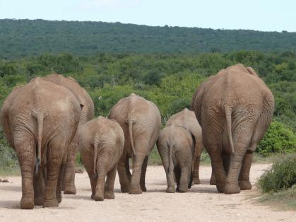 elephant-334456_1920.jpg