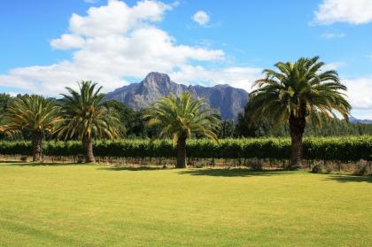 Reistips Kaapstad - Franschhoek wijngaarde