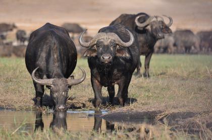Op safari dichtbij Kaapstad - Aquila safaripark