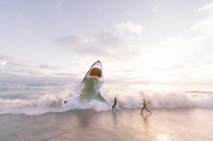 shark-3004153_1920.jpg