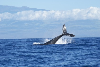 Walvissen en dolfijnen spotten in St. Lucia Zuid-Afrika